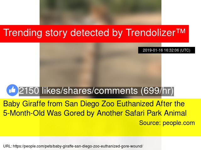 Baby Giraffe From San Diego Zoo Euthanized After The 5 Month Old Was
