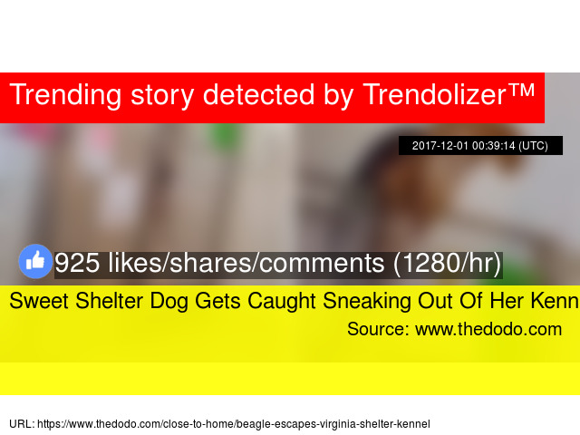 sweet shelter dog gets caught sneaking out of her kennel