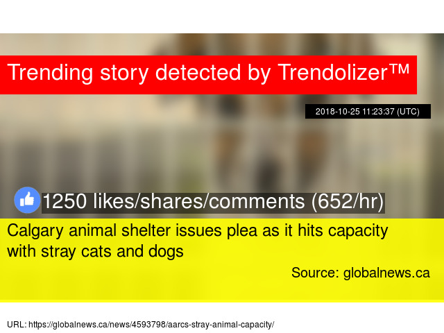 Calgary animal shelter issues plea as it hits capacity with
